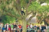 PGA Golfer Hits Chip Shot From A Tree