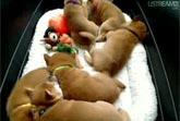 Puppy Cam - Live