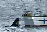 Dog & Killer Whale